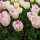Pink Tulips by 3Cavaliers