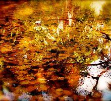 Hidden Nature by HarryHasapis