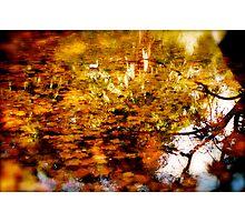 Hidden Nature Photographic Print