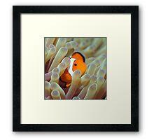 Tropical fish Clownfish Framed Print