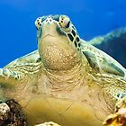 Turtle by MotHaiBaPhoto Dmitry &amp; Olga