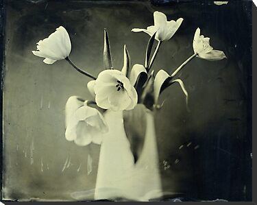 tulips by Deborah Parkin