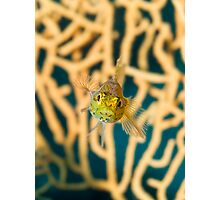 Mediterranean Blenny Macro Photographic Print