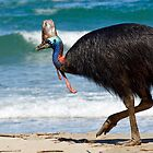 Strolling by - cassowary on the beach by Jenny Dean