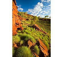 Sunkissed Spinifex Photographic Print