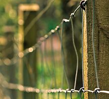 Sunny Fence by chemival
