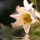 Lillies by Joyce Knorz