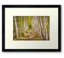 Spring Birch in Acadia Framed Print