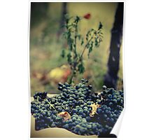 Ready for Wine Poster
