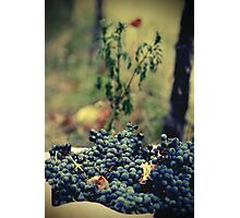 Ready for Wine Photographic Print