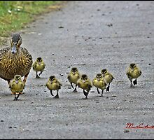 """ Come along girls, keep up! by Malcolm Chant"