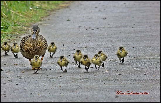 """"""" Come along girls, keep up! by mrcoradour"""