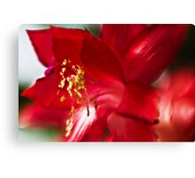 Red impression - Lensbaby macro Canvas Print