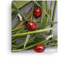 Ladybird Garden Canvas Print