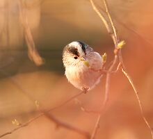 Long tail tit 1 by MB-Photography