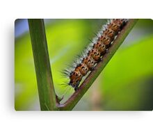 Insect Intersection Canvas Print