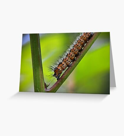 Insect Intersection Greeting Card