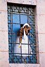 Gypsy by photosbytony
