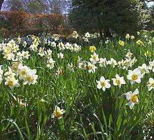 A field of flowers by Steve plowman