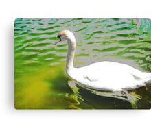 The swan and the aquamarine lake Canvas Print
