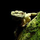 Iguana by Andreas  Berheide