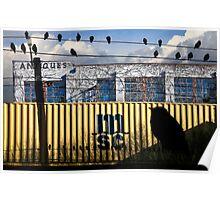 The Yardbirds Poster