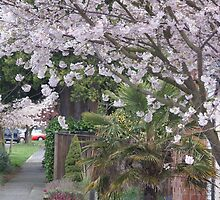 Spring in Crown Hill by Loisb