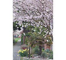 Spring in Crown Hill Photographic Print