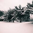 Snow Trees by babibell