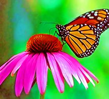 Monarch (butterfly) by JohnDSmith