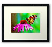Monarch (butterfly) Framed Print