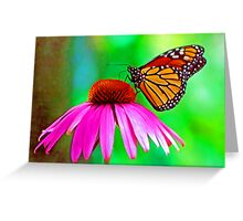 Monarch (butterfly) Greeting Card