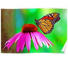 Monarch (butterfly) Poster