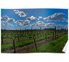 Sandalford Wines Poster