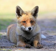 Red Fox - 2267 by DutchLumix
