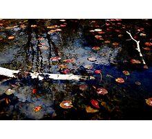 Fallen Birch Photographic Print