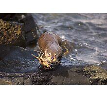 My Crab Photographic Print
