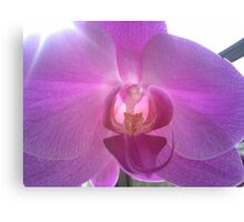 Pearly Orchid Canvas Print