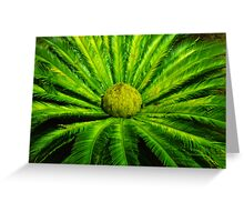 Cycad in the Desert Greeting Card