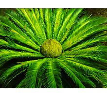 Cycad in the Desert Photographic Print