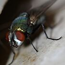 green fly  by katpartridge