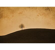 Orange Tree Photographic Print