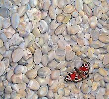 Peacock Butterfly on pebbles by Astrid de Cock