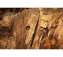 Textured tree stump macro Photographic Print