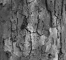 Black and White textured tree trunk macro by Shelley Spencer