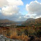 Kerry National Park by Martina Fagan
