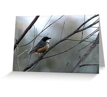 Rufous Whistler Male Greeting Card