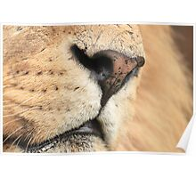 Face of the big cat Poster