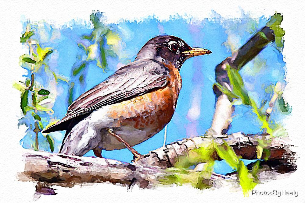 Robin - watercolour by PhotosByHealy