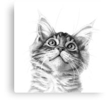 Kitten looking up G115 Canvas Print